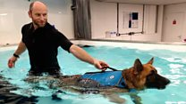 Injured veterans provide hydrotherapy for dogs