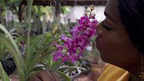 La fine fleur des paysagistes africains