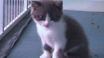「クローン猫」、中国で誕生 バイオ業界に批判も