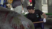 ประเพณีการล่าวาฬที่กำลังจะสูญหายในญี่ปุ่น?