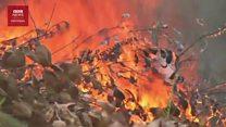 Pemadam kebakaran Palangkaraya: 'Sumber air kering sementara api mudah muncul'