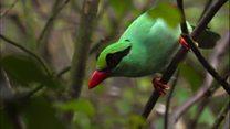 کاهش جمعیت پرندگان در آسیا و آمریکا