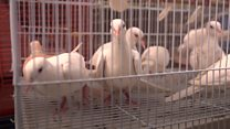 The Kabul market that sells birds from around the world