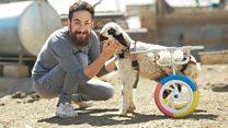 'Hayat Tamircisi' Hasan Kızıl artık hayvanlara 3D yazıcı ile protez yapıyor