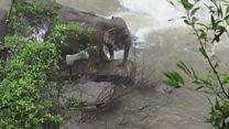 Шест слонова страдало покушавајући да се спаси