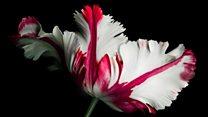 As novas raízes do comércio global de flores