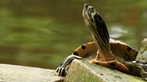 Meet the turtles who made Cardiff their home
