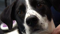 'Brainy Dogs scheme gave me my best friend'