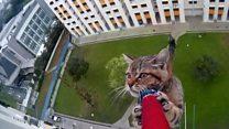 Любиш кота - убезпеч його від польоту з вікна