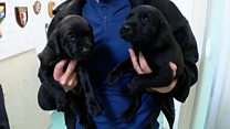 Police recruits 'enjoying the life of a puppy'