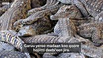 Nama jiruun isaa naacha kunuunsuu ta'e Aarbaa Mincirraa maal jedha?