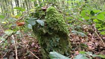 Bronze Age monument discovered in forest