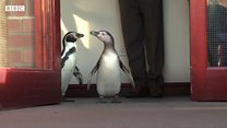 Penguins therapy visit to care home