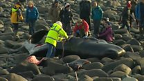 Young sperm whale dies on beach