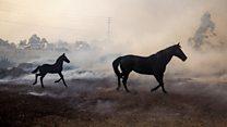 'Hero' horses of California wildfires