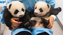 ICYMI: A drag race and two nameless pandas