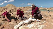 ขุดกระดูกไดโนเสาร์จากสุสานลับในสหรัฐฯ