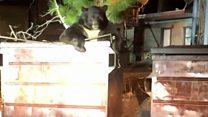 Giant bear trapped in bin helped by police