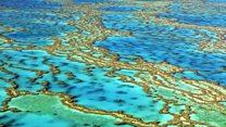 تلاش برای نجات دیواره بزرگ مرجانی چطور آغاز شد؟