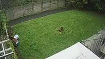 Dog theft caught on CCTV