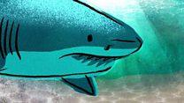 ผิวหนังฉลามอาจช่วยต้านซูเปอร์บั๊ก