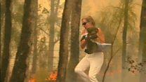 Injured koala reunited with bushfire hero