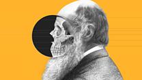 O que é a teoria da evolução de Charles Darwin e o que inspirou suas ideias revolucionárias