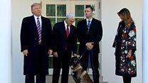 IS指導者を追い詰めた軍用犬「コナン」、ホワイトハウスでお披露目