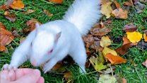 White squirrel hot spot in Sussex