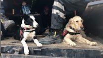 Пси спасиоци Албанија