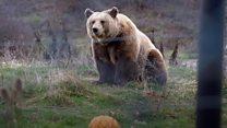 Spas za kosovske medvede