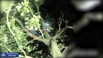 Joseph McCann arrested up a tree