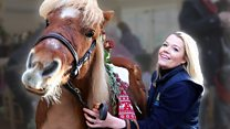 Hungry pony noshes care home's Christmas buffet