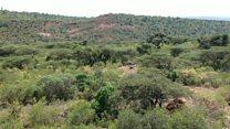 Making Ethiopia green again