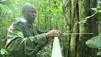 نمونهای موفق از حفظ محیط زیست با احیای جنگلها در اوگاندا