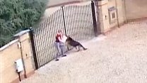 CCTV shows YouTube star's dog attacking woman