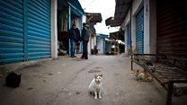 الفيسبوك يطيح بقاتل القطط في تونس