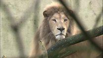 سازمانهای خیریه فرانسوی به برگشت حیوانات به طبیعت کمک میکنند