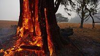 ऑस्ट्रेलिया की आग पर बारिश का मरहम