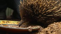 'Nothing left to eat' for animals after bushfires