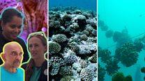 气候变化:人工养殖场拯救珊瑚礁