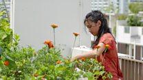 'باغبانی مجھے سکون فراہم کرتی ہے'