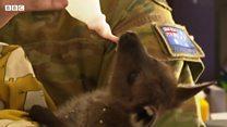 Пожари у Аустралији: Хеликоптери бацали шаргарепе за угрожене животиње
