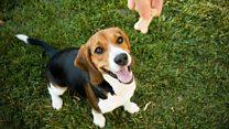 Million dollar idea: The dog biscuit