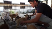 Rescuing animals from a Philippine volcano