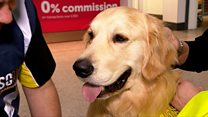 Therapy dogs used for nervous flyers