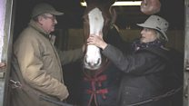 How couple rescued 300 horses by accident