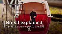 Brexit explained: Can I still travel with my pet?