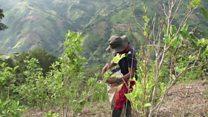 توافق صلح در کلمبیا چگونه تولید کوکائین را افزایش داد؟