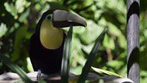منقار طائر يصبح رمزا لحماية الحيوان